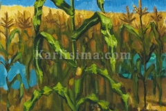 cornfield_and_blue_river